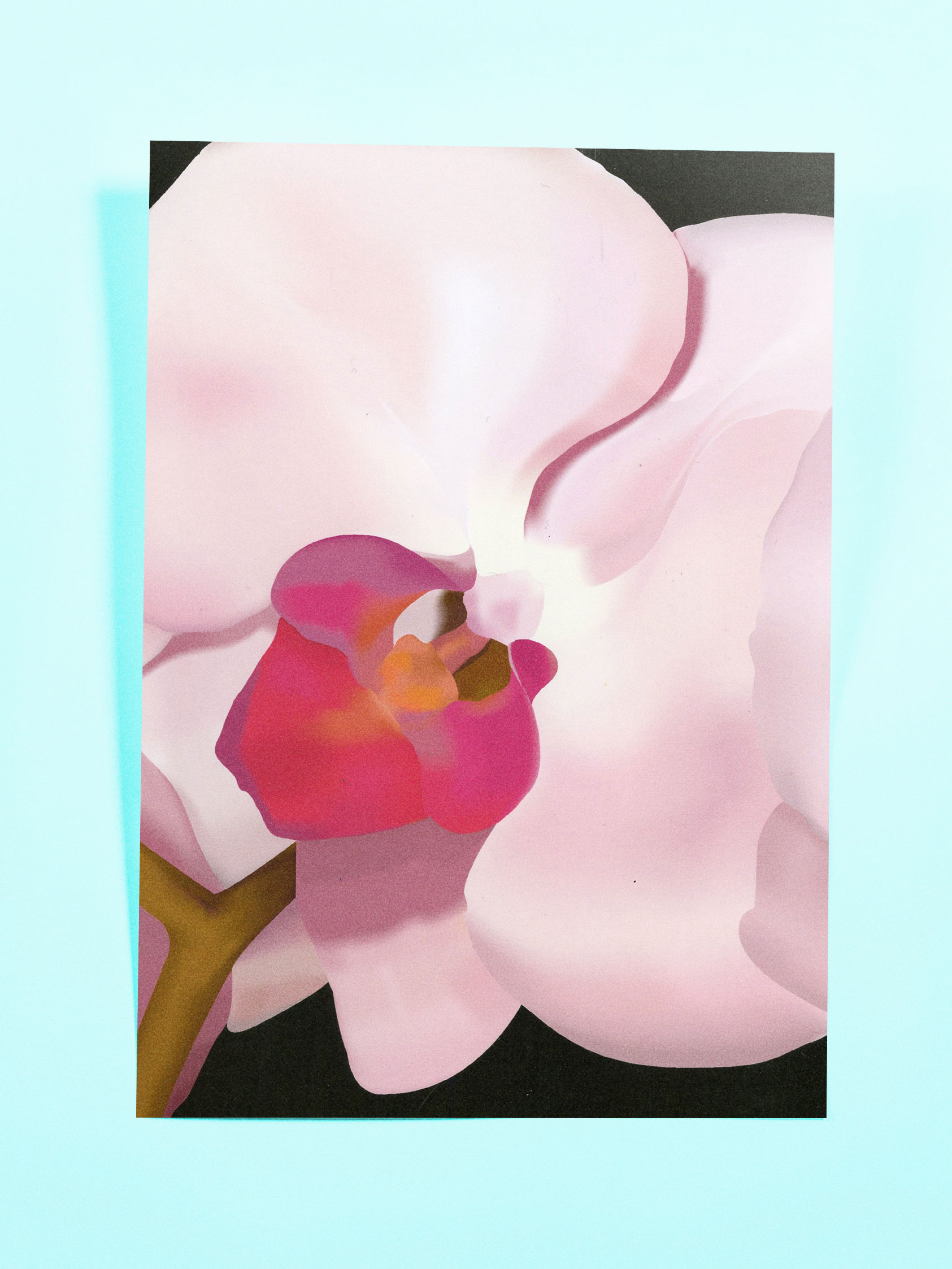 Orchid Illustration